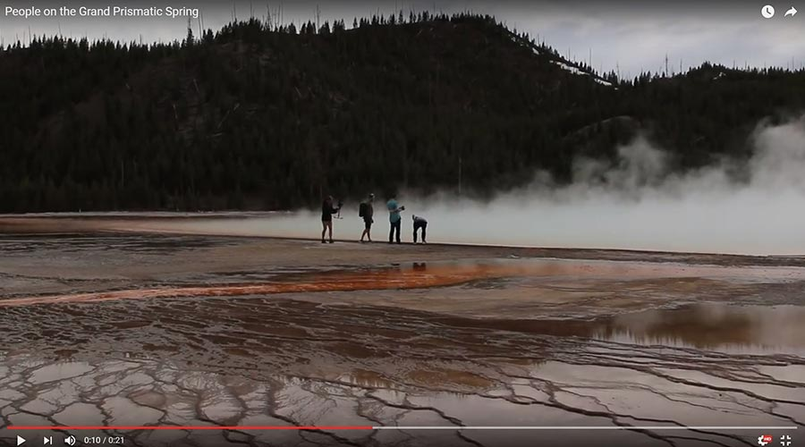 More Stupidity in Yellowstone